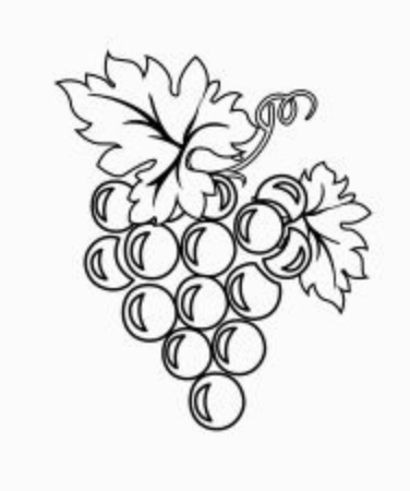 BLACK AND WHITE BUNCH OF GRAPES
