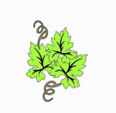 illustration green wine leaves logo with bunch