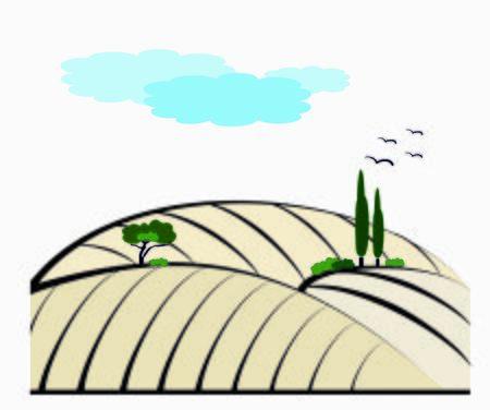 vineyard vector illustration rural landscape
