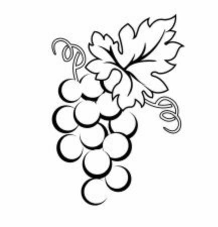 Illustration grape wine winery logo illustration