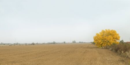Autumn landscape. Yellow tree in agriculture field