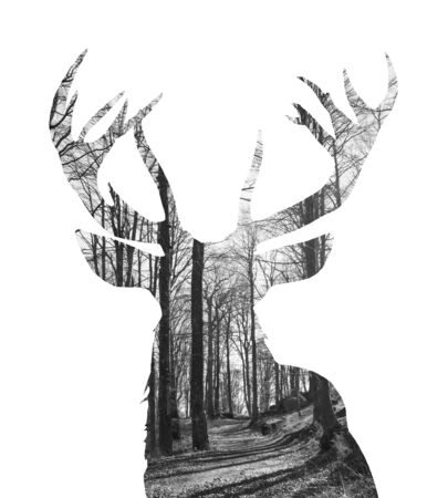 Concept art - Exposure portrait of young Reindeer and dried forest