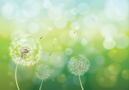 Vector illustration of spring background with white dandelions. Dandelion seeds blowing from stem.