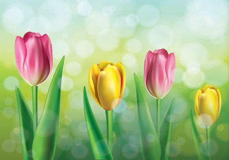 Vector illustration of spring background with pink and yellow tulips