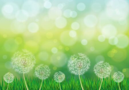 Vector illustration of spring green background with white dandelions and grass Иллюстрация