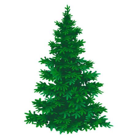 Vector illustration of Pine tree on a white background