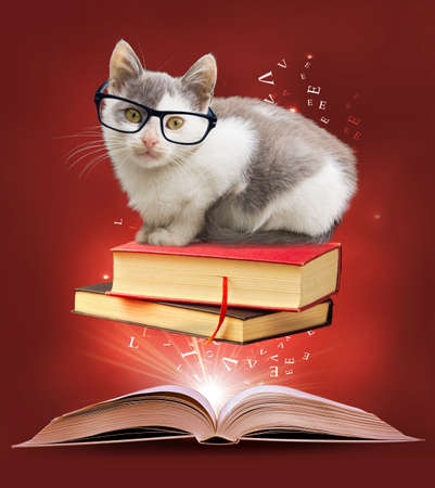 Education illustration. Adorable kitty in glasses and old books.