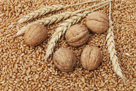 autmn: Wheat and nuts in close up