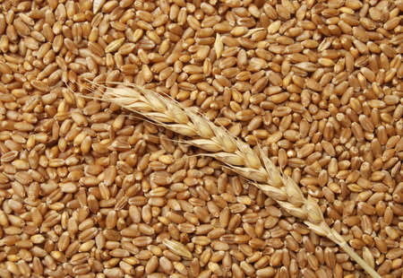 Wheat background in close up Stock Photo