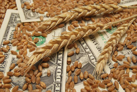 Wheat and dollar banknote in close up photo