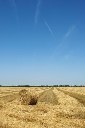 serbia landscape: Rolled straw after harvesting in wheat field Stock Photo