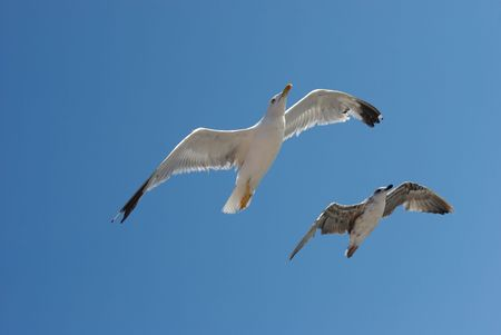 White and black seagulls flying over blue sky photo