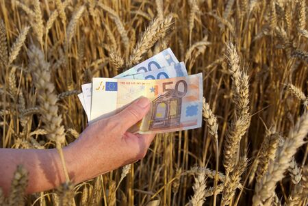 Human hand with euros in wheat field photo
