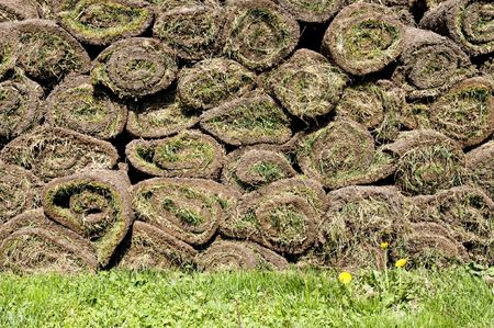 turf pile: Roll of sod-instant grass