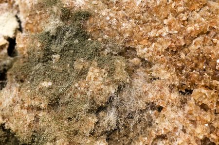 Extreme close up of mildew at bread photo