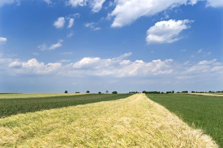 Wheat and clover field in spring with blue sky and clouds Stock Photo - 5031890