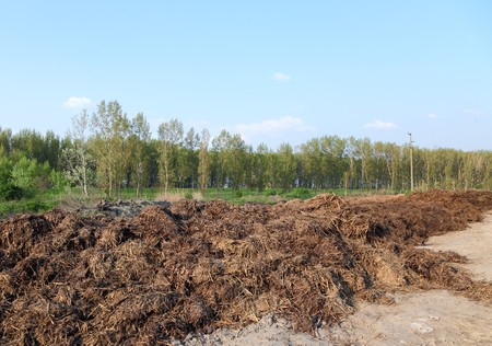 fecal: Heap of cow dung in field