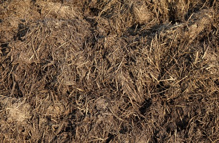 Close up  of cow dung in field Stock Photo - 6954264