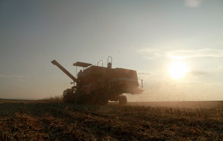 Combine in field harvesting soy, late afternoon and contra light photo