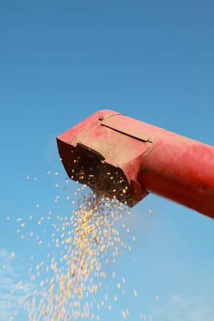 auger: Grain auger of combine pouring soy bean Stock Photo