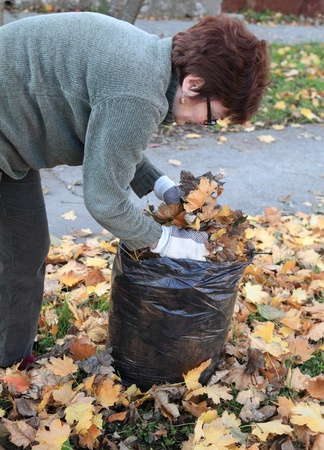 yard work: Senior woman picking leaves in a garden