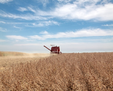 Harvesting of soy bean field with combine photo