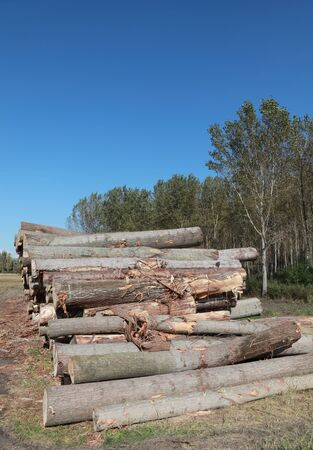 Wood exploitation, heap of logs in forest Stock Photo - 9116520