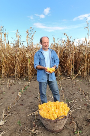 Farmer holding corn cobs in hands in front of corn plant photo