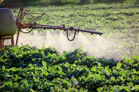 pulverizador: Pulverización de campo de soja a principios del verano Foto de archivo