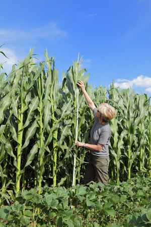 Female agricultural expert inspecting quality of corn photo