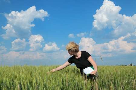 farm worker: Female agricultural expert inspecting quality of wheat