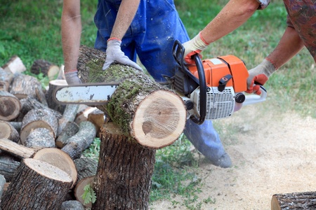 saws: Workers hands  with  saw cutting heap of logs