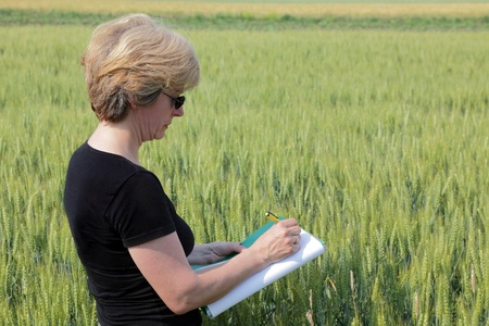 Agricultural expert inspecting quality of wheat photo