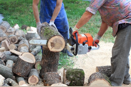 logger: Logger and assistant cutting heap of logs  with  chainsaw