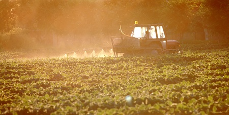 Spraying of soy field in early summer photo