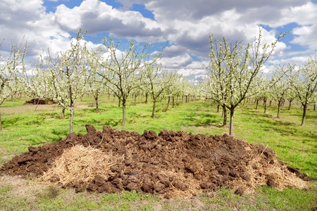 dung: Heap of dung with orchard in background