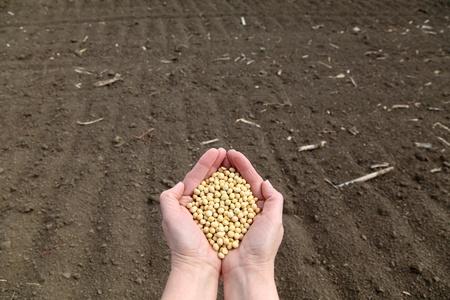 siembra: La mano del hombre la celebración de la soja, con el campo en el fondo