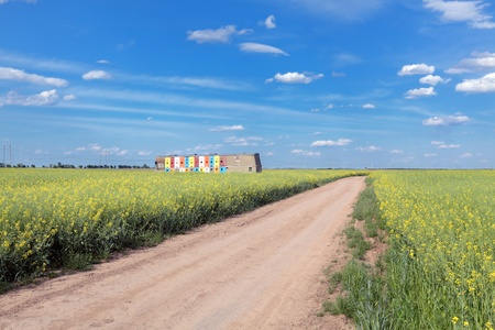 Country road and rapeseed  field with bee hives photo
