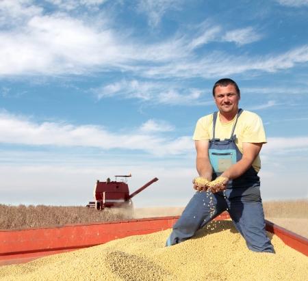 農家: 結合と大豆マメ畑の収穫 写真素材