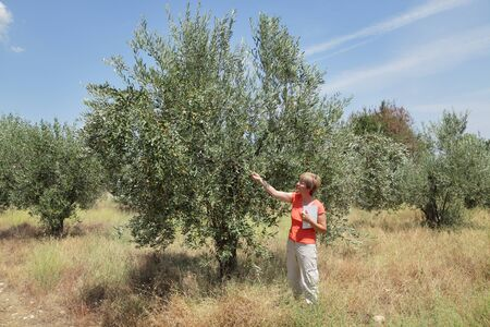 Female agricultural expert inspecting quality of olive tree in olives orchard Stock Photo - 15199107
