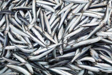 anchovy fish: Heap of small Mediterranean fish at market