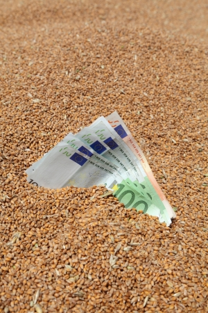 cash crop: Wheat and Euro banknote in close up Stock Photo
