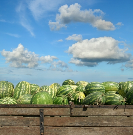 Heap of watermelon at farmers market over  blue sky Reklamní fotografie - 20990673