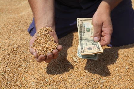 winter wheat: Farmer hands holding dollar banknote at wheat crop