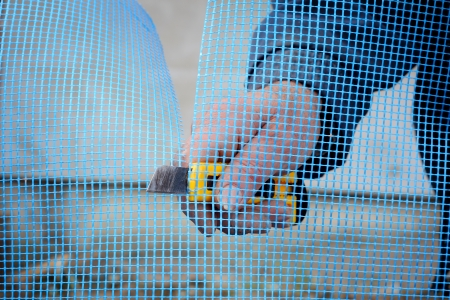 construction mesh: Close up of worker hands cut mesh for polystyrene insulation