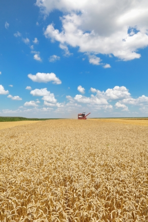combine harvester: Agriculture, harvesting of wheat with combine in field, focus on wheat Stock Photo