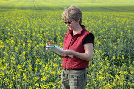 agronomist: Agricultural expert inspecting quality of oil rape Stock Photo