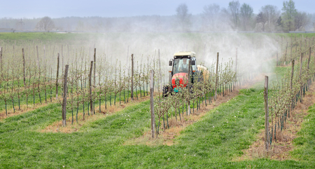 Tractor sprays  insecticide or fungicide in apple orchard  Stock Photo