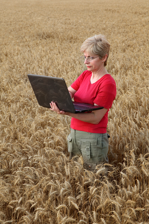 inspecting: Agricultural expert inspecting quality of wheat, using laptop