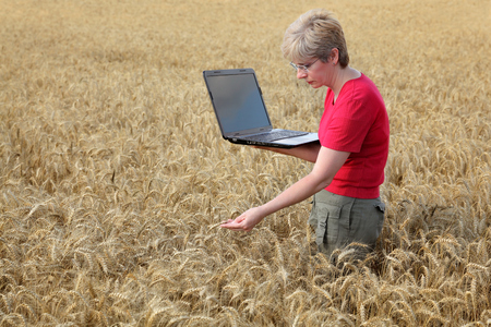 Agricultural expert inspecting quality of wheat, using laptop photo